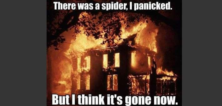 When Spider Fear Takes Over
