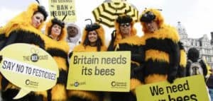 People in bee costumes, spiders as important as bees