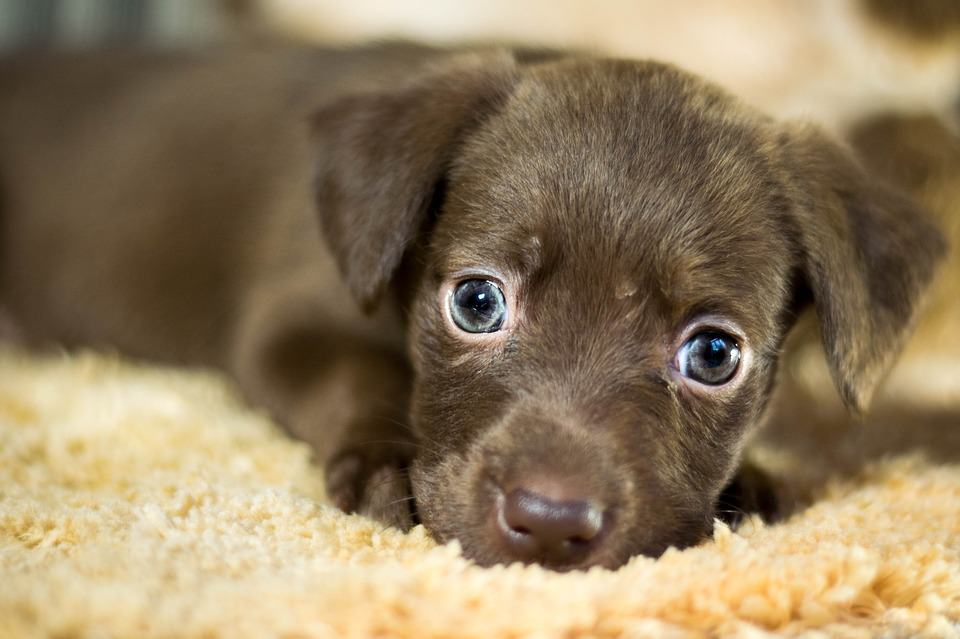 Pictures Of Courage The Dog As A Puppy